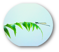 dragonfly-1118669_1920.png